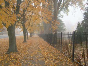 Autumn Walk Jpeg
