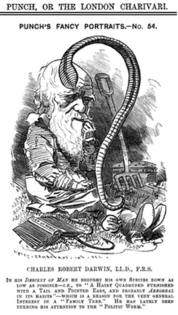 Darwinpunch 2