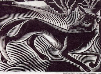Fox engraving