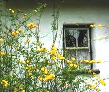 The Window2