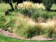 Ornamental grass bed