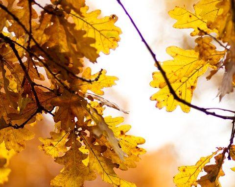 Sun streams through the leaves